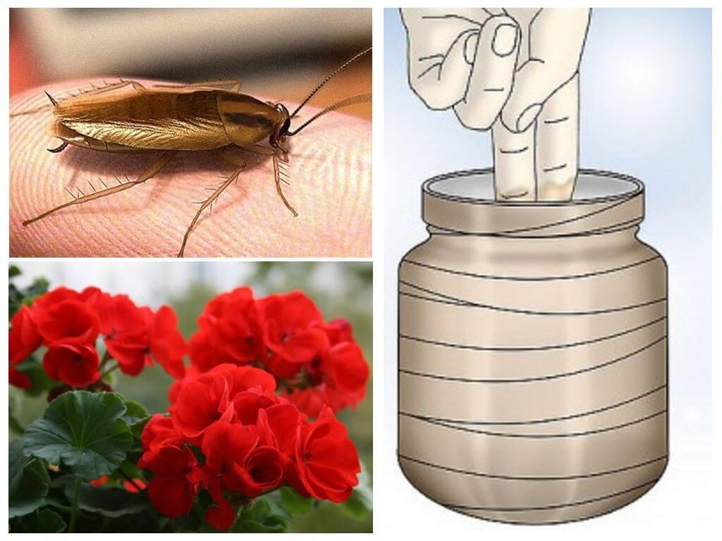 Народные средства от тараканов: борная кислота, бура, пиретрум, эфирное масло
