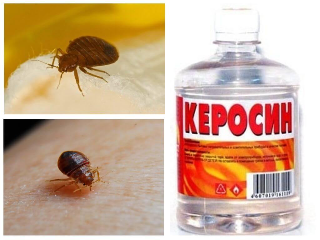 керосин против паразитов в организме человека