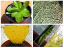 Мошки в комнатных растениях