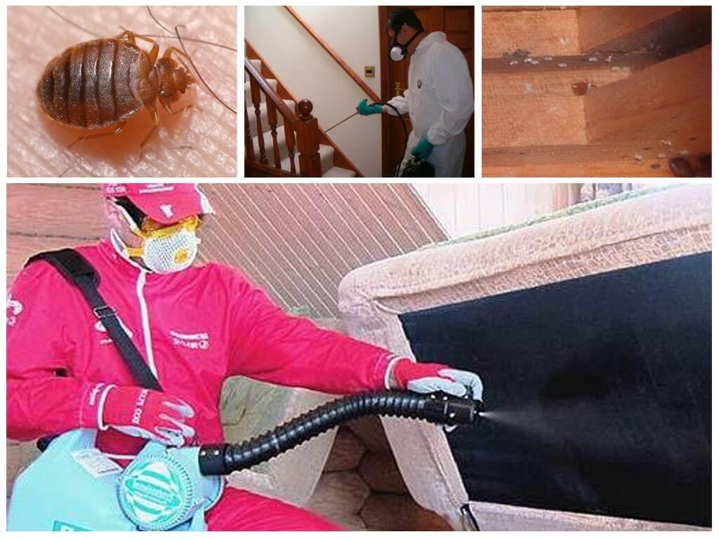 обработка квартиры от паразитов челябинск