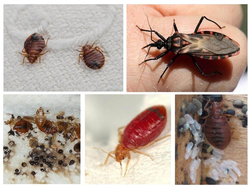 избавиться паразитов живущих человеке