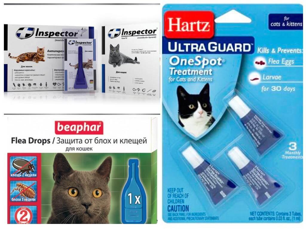 супрастин для кошек от аллергии отзывы