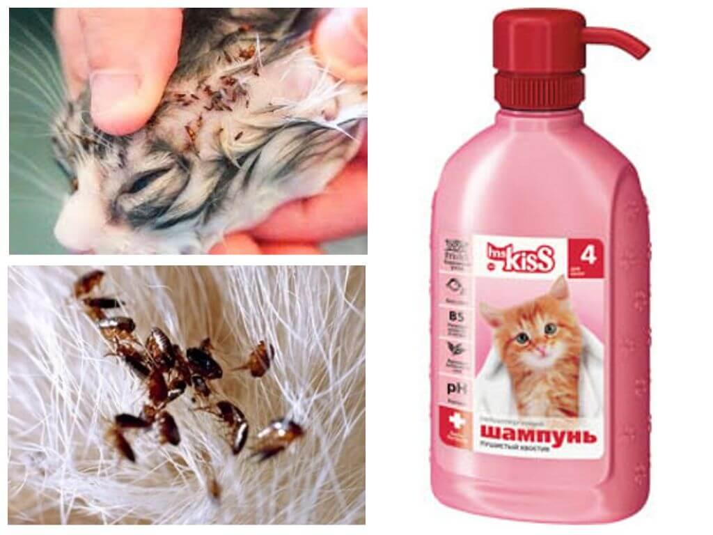 супрастин для кошек от аллергии дозировка