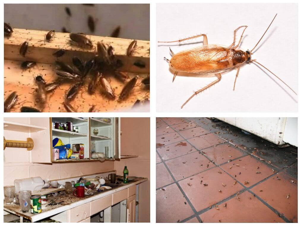 Как раз и навсегда избавиться от тараканов в квартире
