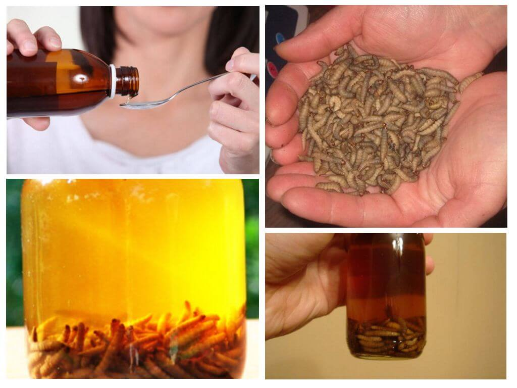 Настойка пчелиной моли: что она лечит и как ее употреблять