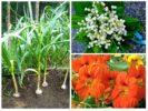 Растения от земляничного долгоносика