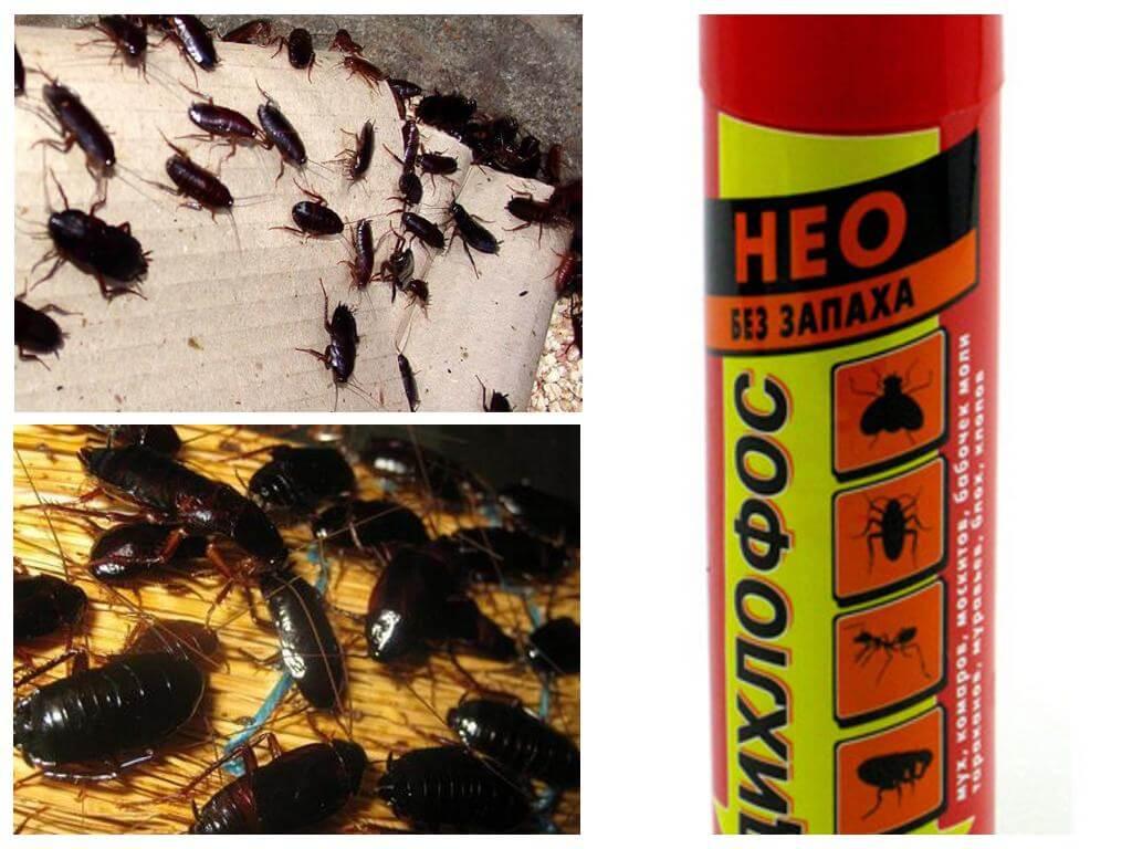 Помогает ли дихлофос от тараканов — как травить