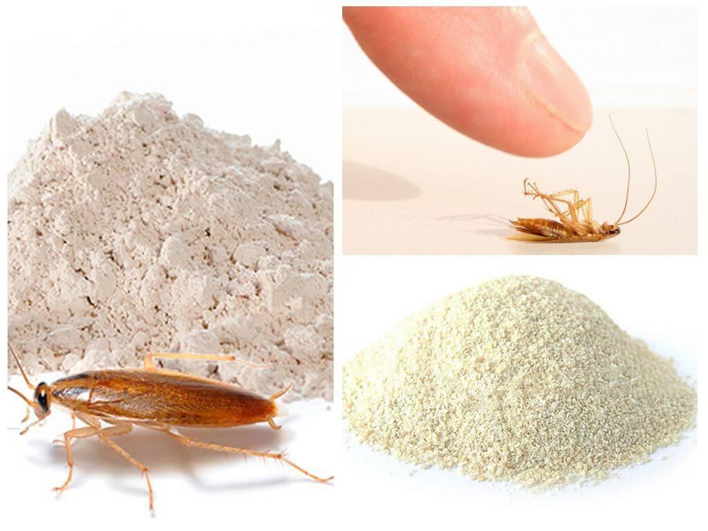 Порошки от тараканов: виды и как их использовать