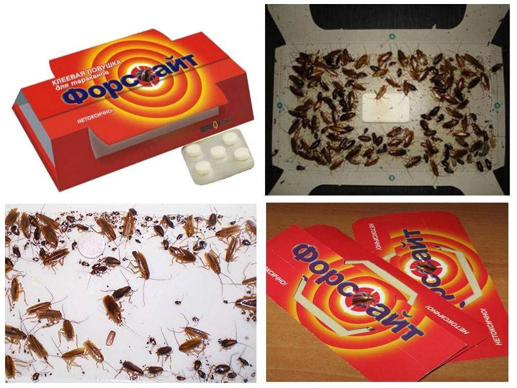 Ловушка Форсайт для тараканов