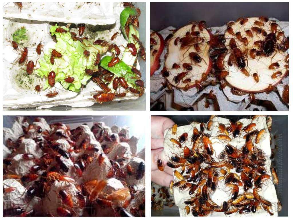 Туркменские тараканы-1