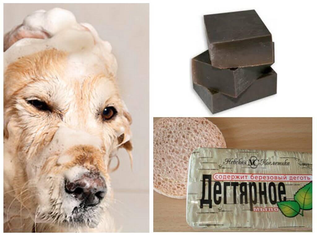 Как и чем вывести блох у собаки в 30