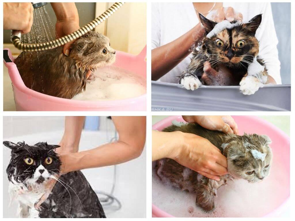 Как помыть кота от блох шампунем