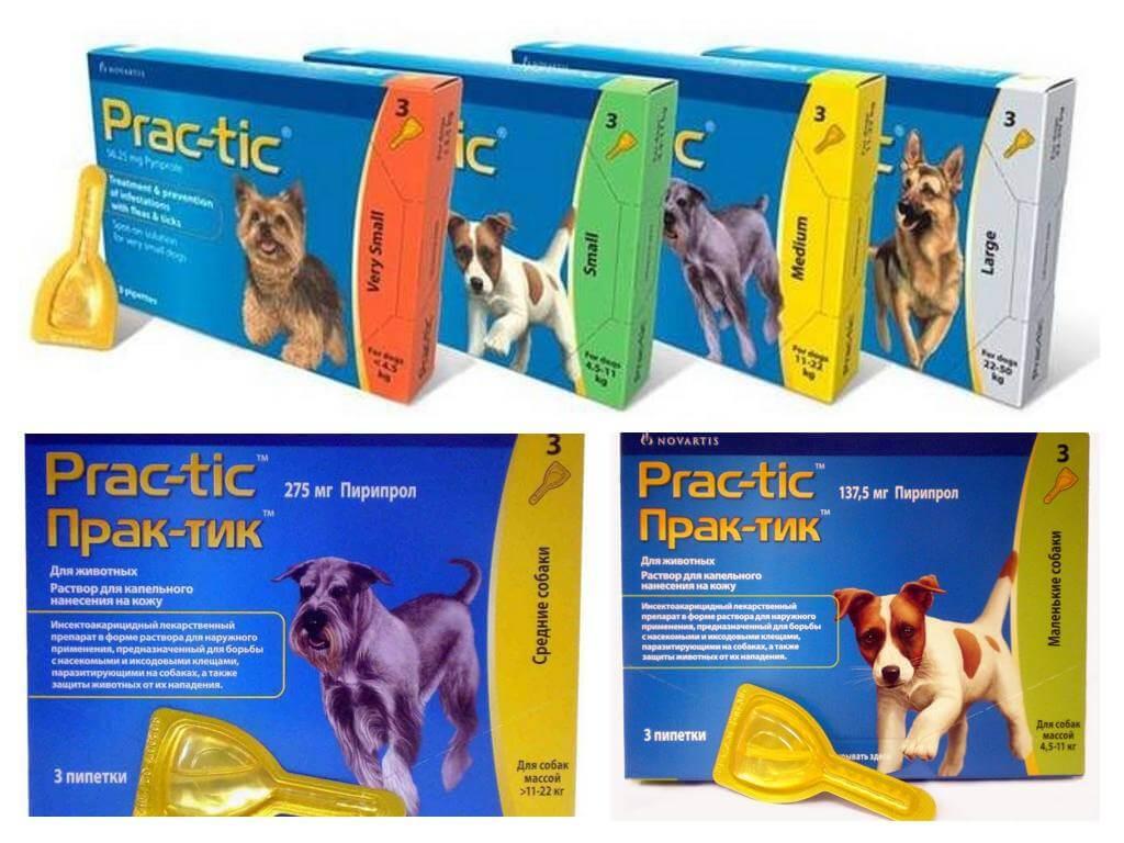 Капли практик для собак от блох и клещей: инструкция по применению.