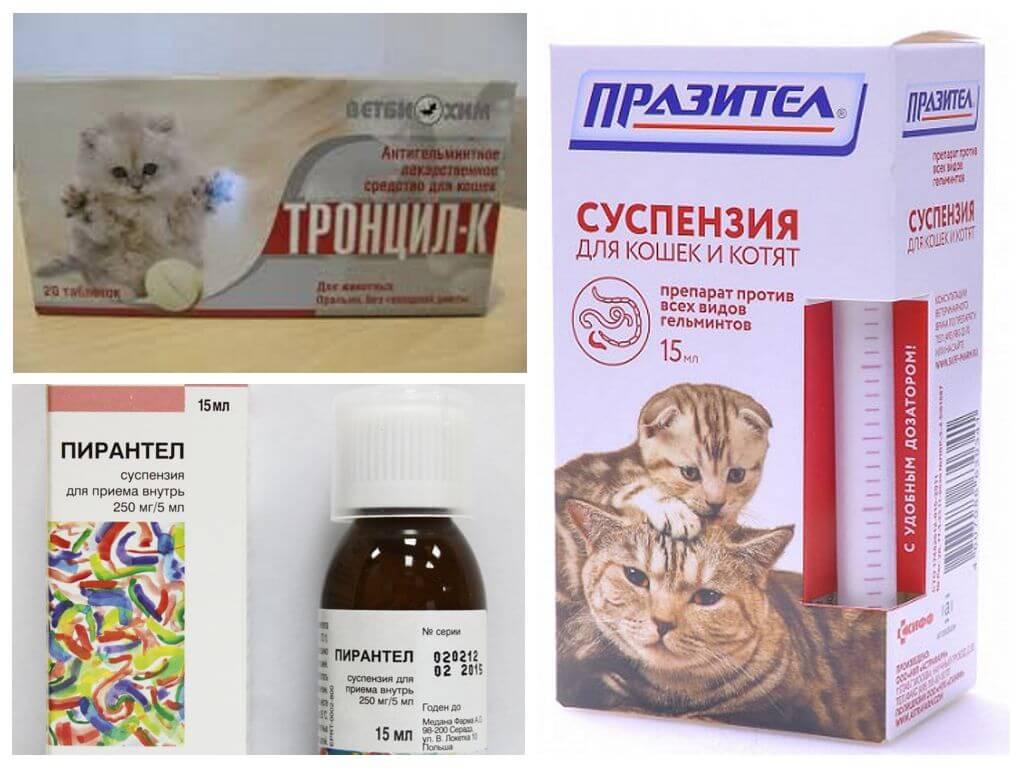 препараты от гельминтов у собак