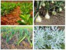 Растения от травяной блохи