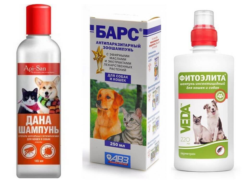 Самые популярные и эффективные шампуни от блох для собак