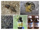 Меры борьбы с капустянками