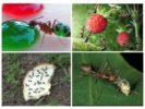 Еда для муравьев