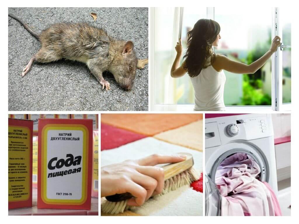 Как избавиться от запаха мышей в доме