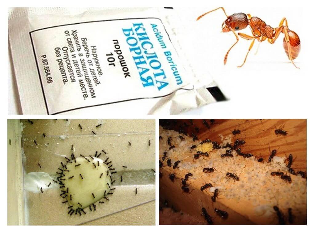 борная кислота от муравьев в квартире рецепт с яйцом отзывы пропорции