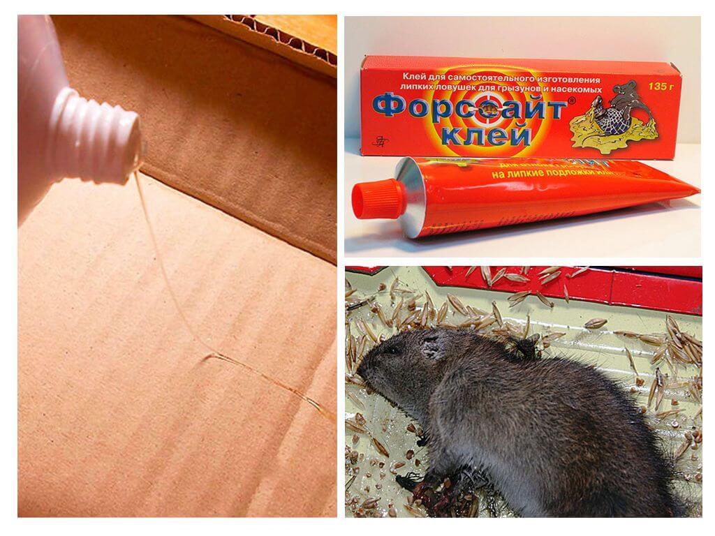 Лучшее средство от крыс в частном доме народными средствами