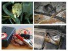 Крысы в машине