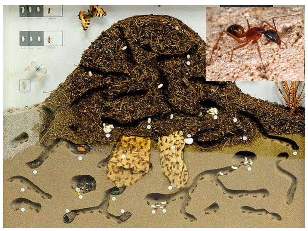 комплект картинки муравейник изнутри этапом ухода