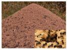 Внешний вид муравейника
