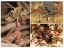 Питание муравьев хищников