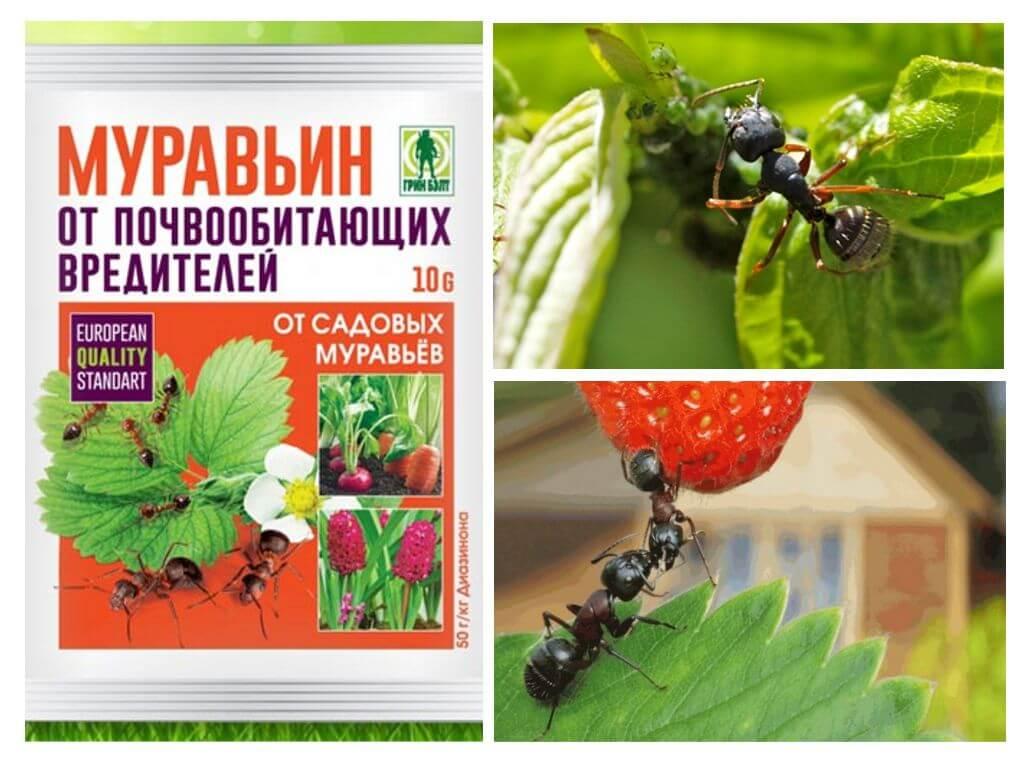 Муравьин 10 г от муравьев: инструкция по применению и отзывы