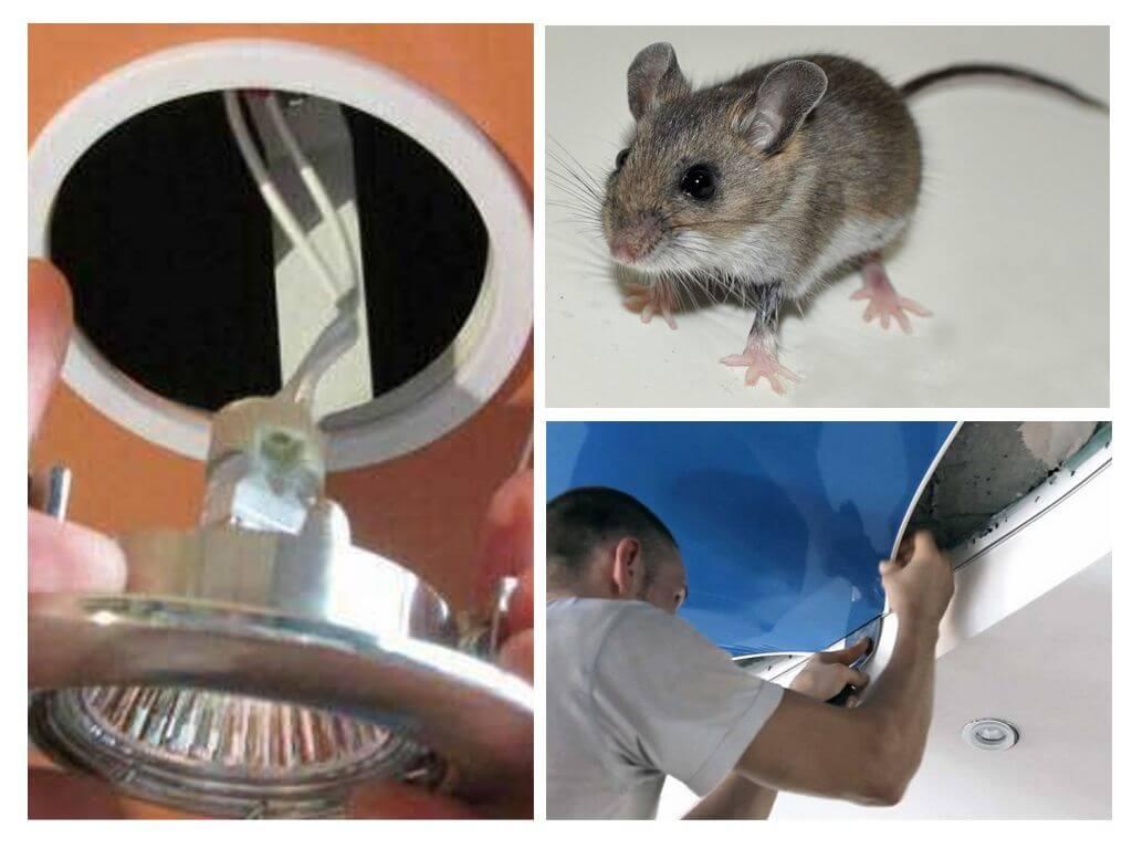 Как избавиться от мышей в натяжном потолке