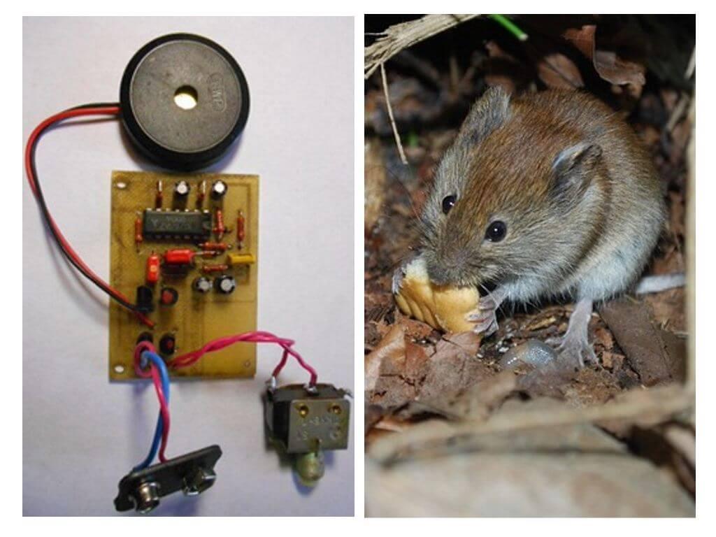 как проверить работу ультразвукового отпугивателя мышей
