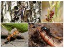 Пища для насекомых в природе