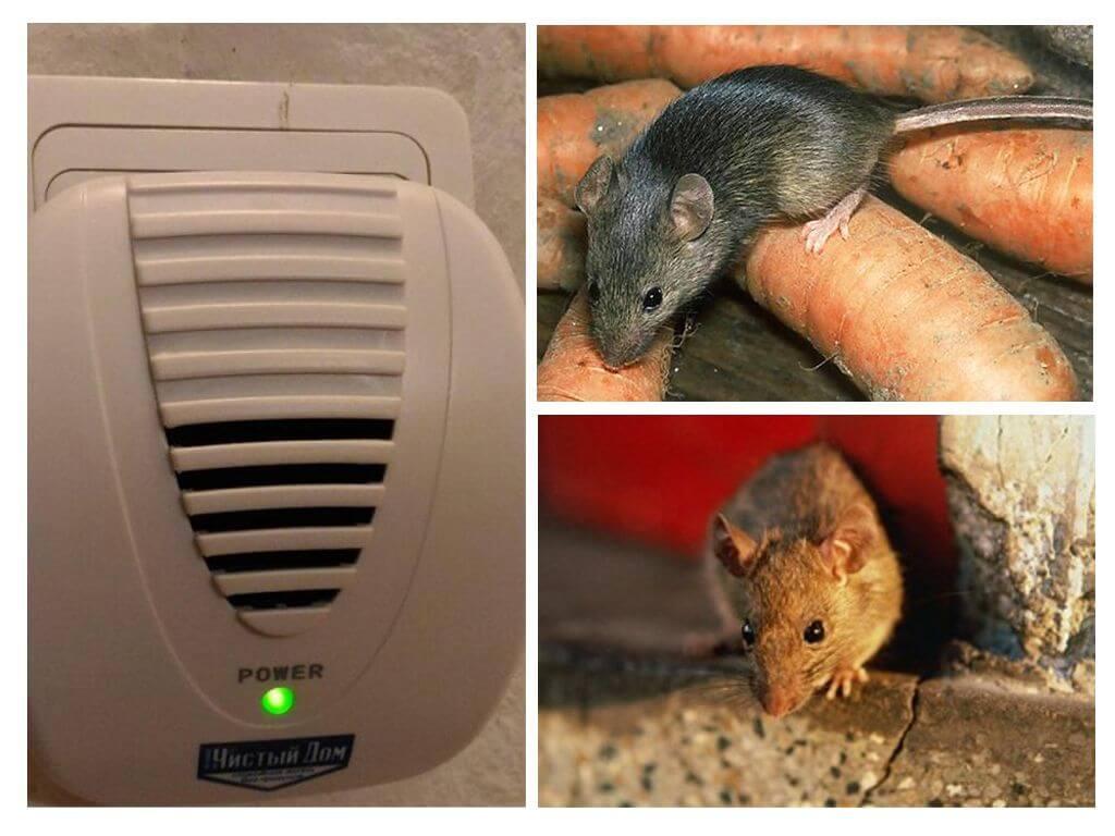 Отзыв об ультрозвуковом отпугиватели крыс отпугиватель собак грн