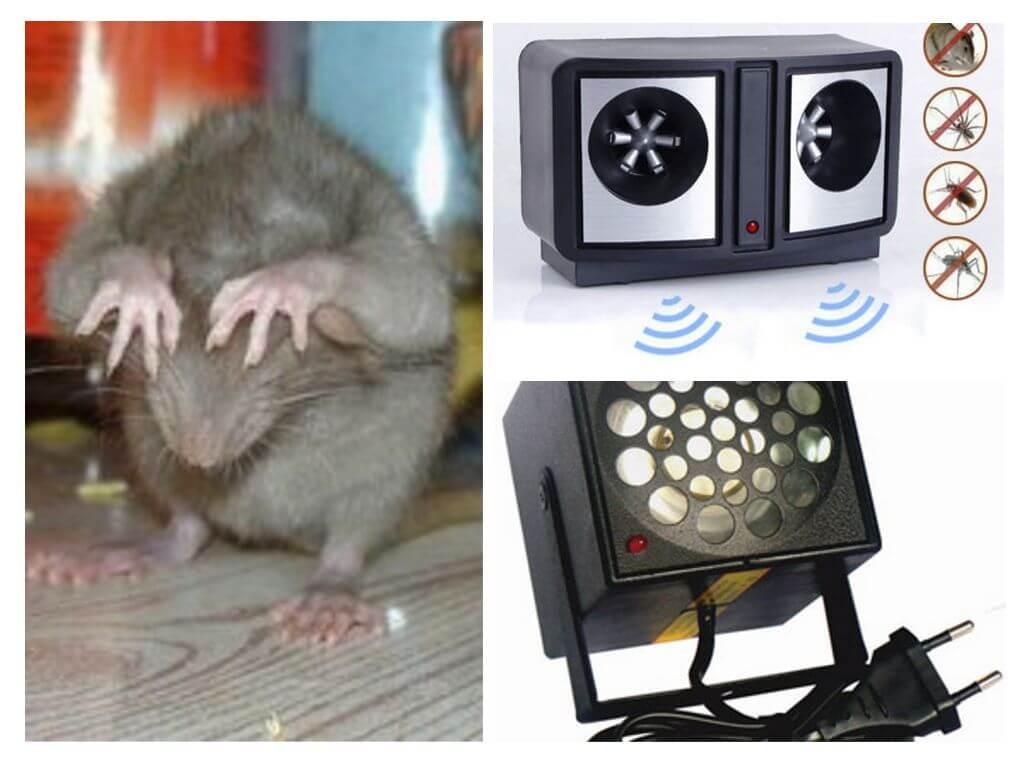 Какой лучше отпугиватель мышей и крыс