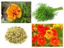 Растения от вредителей