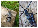 Размножение жуков