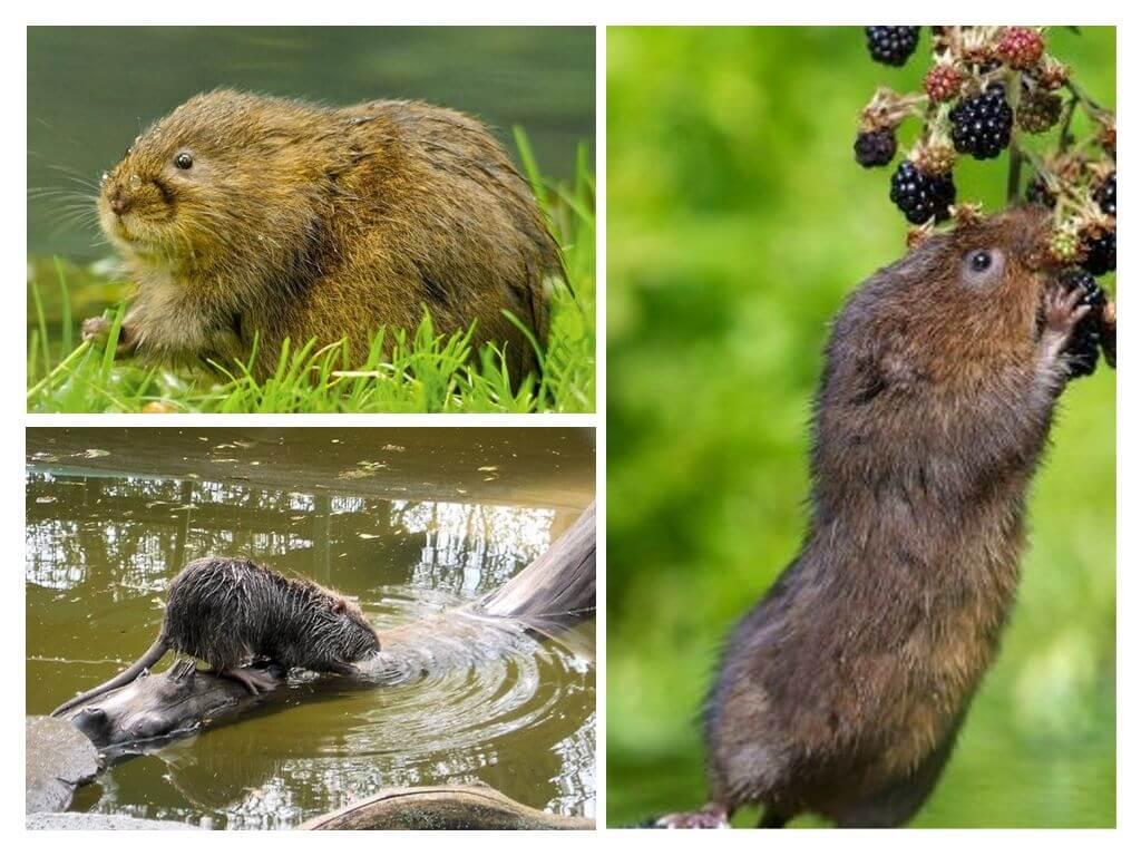 Среда обитания крыс