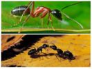 Вес муравья