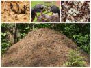 Жилье насекомых