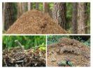 Жилище муравьев