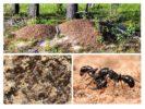 Жизнь муравейника