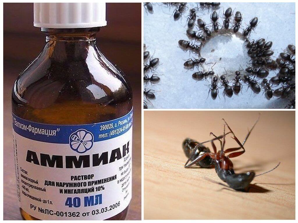 Нашатырный спирт от муравьев и тли