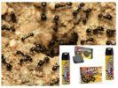 Combat от муравьев