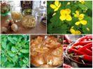 Народные рецепты от вредителей