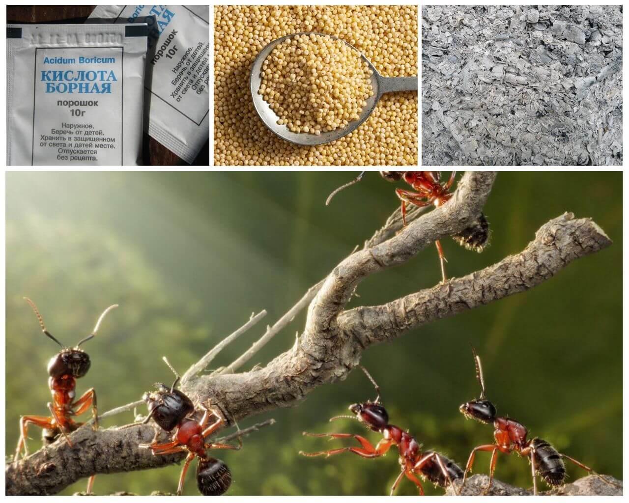 Борьба с муравьями на садовом участке народными средствами