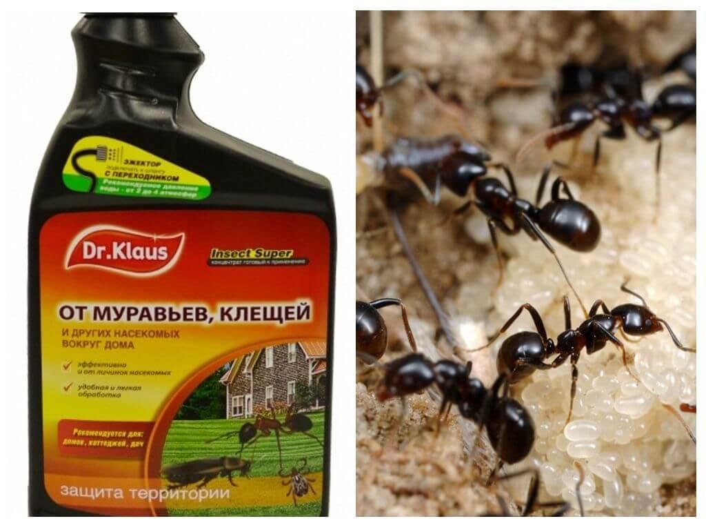 Доктор Клаус от муравьев и клещей