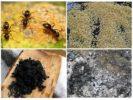 Народные рецепты от муравьев