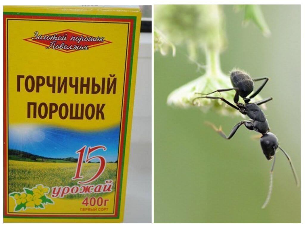 Горчичный порошок от муравьев и тли в огороде