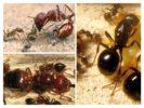 Иерархия муравейника